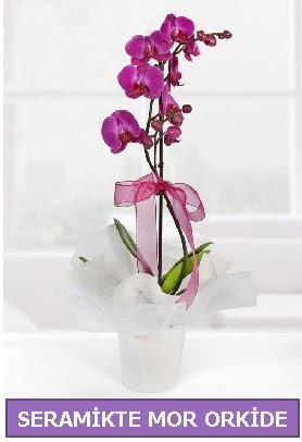 Seramik içerisinde birinci kalite tek dallı mor orkide  Batman İnternetten çiçek siparişi