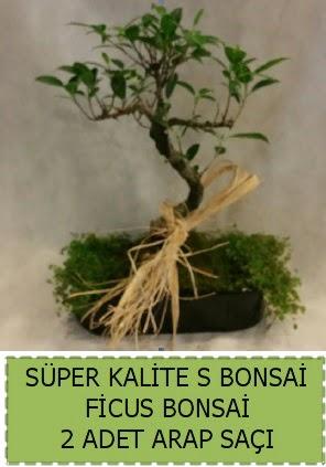 Ficus S Bonsai ve arap saçı  Batman çiçekçi telefonları