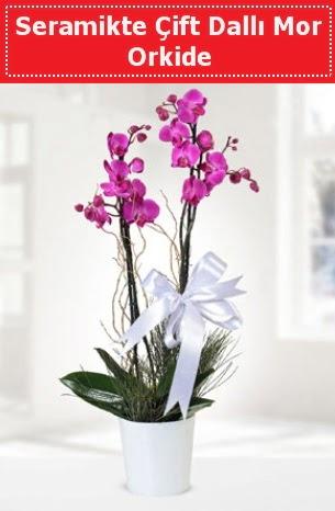 Seramikte Çift Dallı Mor Orkide  Batman anneler günü çiçek yolla