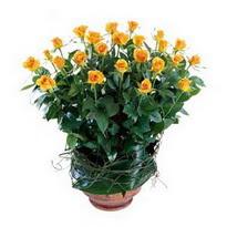Batman cicekciler , cicek siparisi  10 adet sari gül tanzim cam yada mika vazoda çiçek
