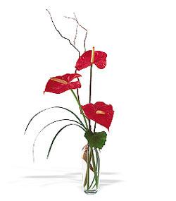 Batman çiçek siparişi sitesi  cam yada mika Vazoda 3 adet  antoryum
