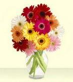 Batman çiçek yolla , çiçek gönder , çiçekçi   cam yada mika vazoda 15 özel gerbera