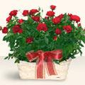 Batman İnternetten çiçek siparişi  11 adet kirmizi gül sepette