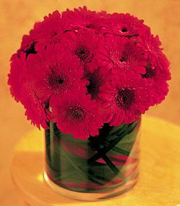 Batman ucuz çiçek gönder  23 adet gerbera çiçegi sade ve sik cam içerisinde