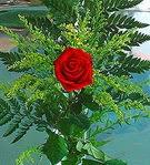 1 adet kirmizi gül buketi   Batman çiçek siparişi vermek