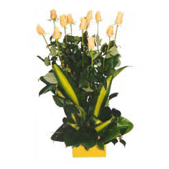 12 adet beyaz gül aranjmani  Batman kaliteli taze ve ucuz çiçekler