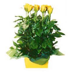 11 adet sari gül aranjmani  Batman online çiçekçi , çiçek siparişi