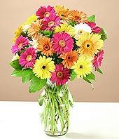 Batman çiçek online çiçek siparişi  17 adet karisik gerbera