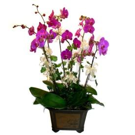 Batman cicek , cicekci  4 adet orkide çiçegi