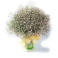 Batman çiçek mağazası , çiçekçi adresleri  cam yada mika vazo içerisinde cipsofilya demeti