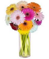 Batman internetten çiçek siparişi  Farkli renklerde 15 adet gerbera çiçegi