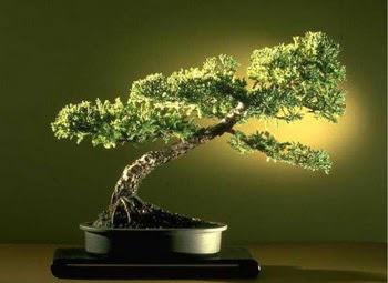 ithal bonsai saksi çiçegi  Batman çiçekçi mağazası