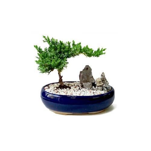 ithal bonsai saksi çiçegi  Batman çiçek gönderme
