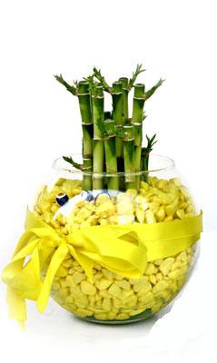 cam fanus içerisinde bambo  Batman internetten çiçek satışı