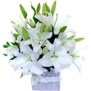 Batman çiçek yolla  2 dal cazablanca vazo çiçeği