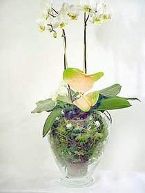 Batman çiçek satışı  Cam yada mika vazoda özel orkideler