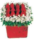 Batman çiçek gönderme  Kare cam yada mika içinde kirmizi güller - anneler günü seçimi özel çiçek