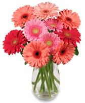 vazo içerisinde 13 adet gerbera çiçeği  Batman çiçek siparişi sitesi
