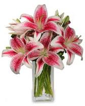 Vazo içerisinde 5 dal kazablanka çiçeği  Batman cicekciler , cicek siparisi
