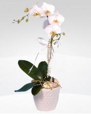 1 dallı orkide saksı çiçeği  Batman online çiçekçi , çiçek siparişi