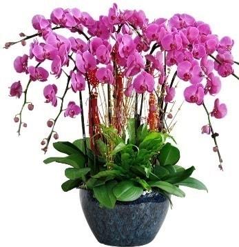 9 dallı mor orkide  Batman 14 şubat sevgililer günü çiçek