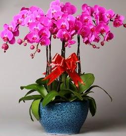 7 dallı mor orkide  Batman çiçek online çiçek siparişi
