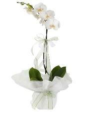 1 dal beyaz orkide çiçeği  Batman çiçek siparişi vermek