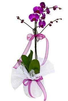 Tek dallı mor orkide  Batman çiçekçi telefonları