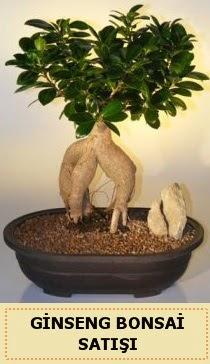 İthal Ginseng bonsai satışı japon ağacı  Batman çiçek siparişi sitesi