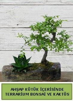 Ahşap kütük bonsai kaktüs teraryum  Batman internetten çiçek siparişi