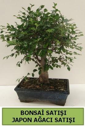 Minyatür bonsai japon ağacı satışı  Batman çiçek gönderme sitemiz güvenlidir