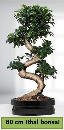 80 cm özel saksıda bonsai bitkisi  Batman çiçekçi telefonları