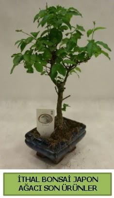 İthal bonsai japon ağacı bitkisi  Batman hediye sevgilime hediye çiçek