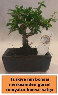 Japon ağacı bonsai satışı ithal görsel  Batman çiçek yolla
