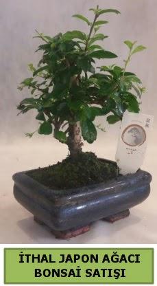 İthal japon ağacı bonsai bitkisi satışı  Batman çiçekçi telefonları