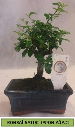 Minyatür bonsai ağacı satışı  Batman çiçek gönderme