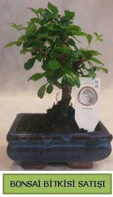 Bonsai ithal görsel minyatür japon ağacı  Batman ucuz çiçek gönder