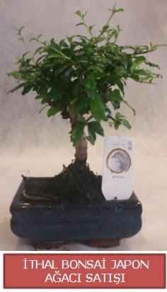 İthal küçük boy minyatür bonsai ağaç bitkisi  Batman çiçekçi telefonları