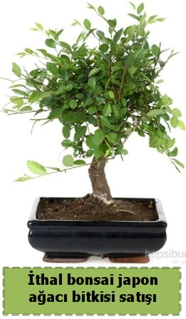 İthal bonsai saksı çiçeği Japon ağacı satışı  Batman İnternetten çiçek siparişi