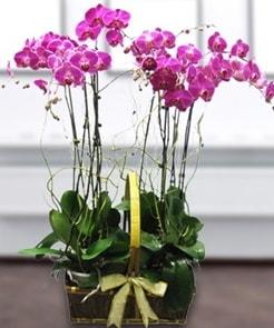 7 dallı mor lila orkide  Batman çiçek gönderme sitemiz güvenlidir