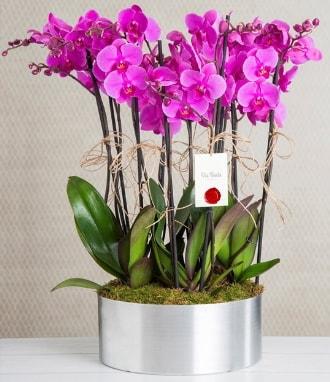 11 dallı mor orkide metal vazoda  Batman çiçek gönderme sitemiz güvenlidir