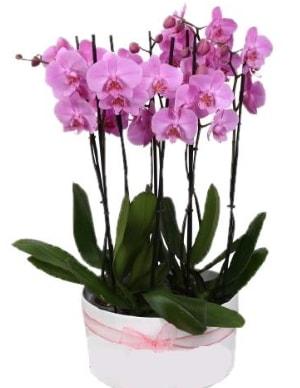 Beyaz seramik içerisinde 7 dallı mor orkide  Batman çiçekçi telefonları