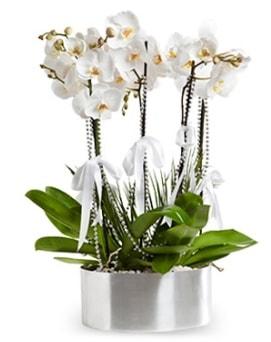 Beş dallı metal saksıda beyaz orkide  Batman çiçek yolla