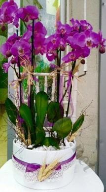 Seramik vazoda 4 dallı mor lila orkide  Batman online çiçek gönderme sipariş