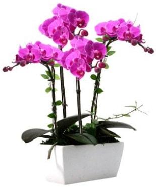 Seramik vazo içerisinde 4 dallı mor orkide  Batman çiçek satışı