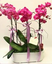 Beyaz seramik içerisinde 4 dallı orkide  Batman ucuz çiçek gönder