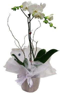 Tek dallı beyaz orkide  Batman cicek , cicekci