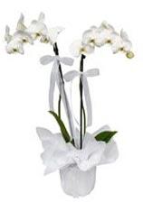 2 dallı beyaz orkide  Batman güvenli kaliteli hızlı çiçek