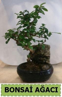 Bonsai ağacı japon ağacı satışı  Batman hediye çiçek yolla