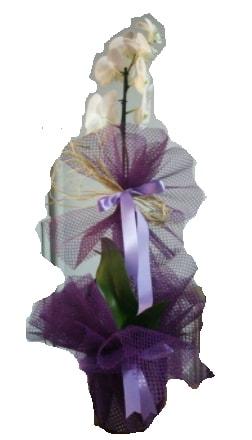 Tek dallı beyaz orkide süper kalite ithal  Batman çiçek siparişi sitesi